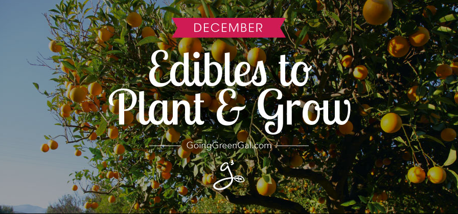 What to Plant and Grow: December